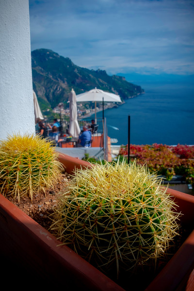 A Prickly Approach - Ravello, Amalfi Coast, Campania, Italy