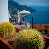 A Prickly Approach - Ravello, Amalfi Coast, Campania, Italy