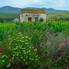 Sicily_Alcamo_20