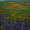 Sicily_Segesta_10