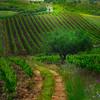 Sicily_Alcamo_27