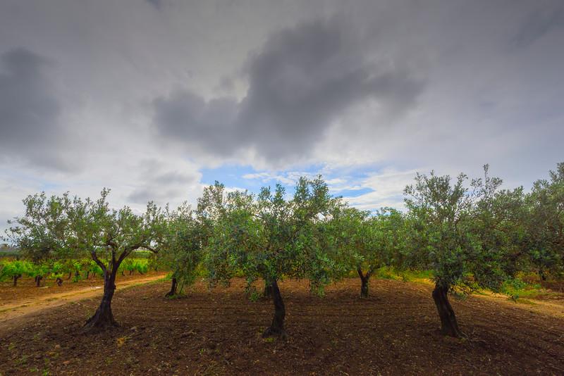 Sicily_Marsala_7