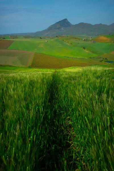 Sicily_Segesta_13