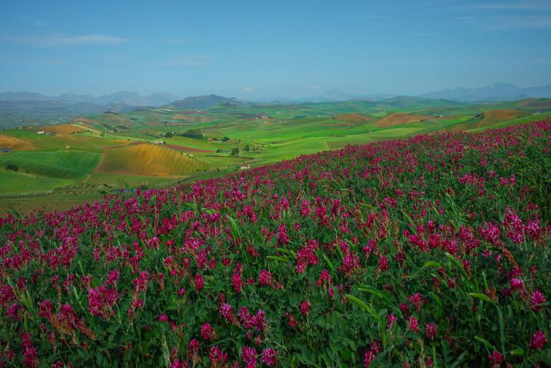 Sicily_Segesta_16