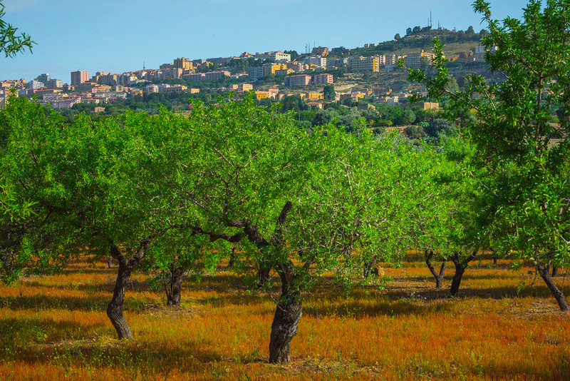 Agrigento_The Valley of the Temples_1
