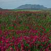 Sicily_Segesta_11