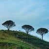 Sicily_Segesta_21