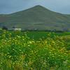 Sicily_Alcamo_26