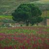 Sicily_Alcamo_28