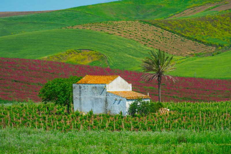Sicily_Segesta_1