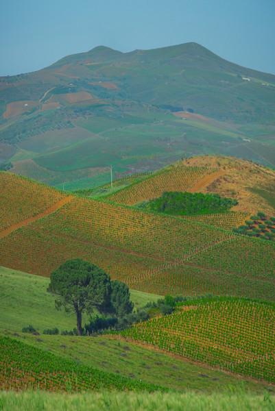 Sicily_Segesta_7