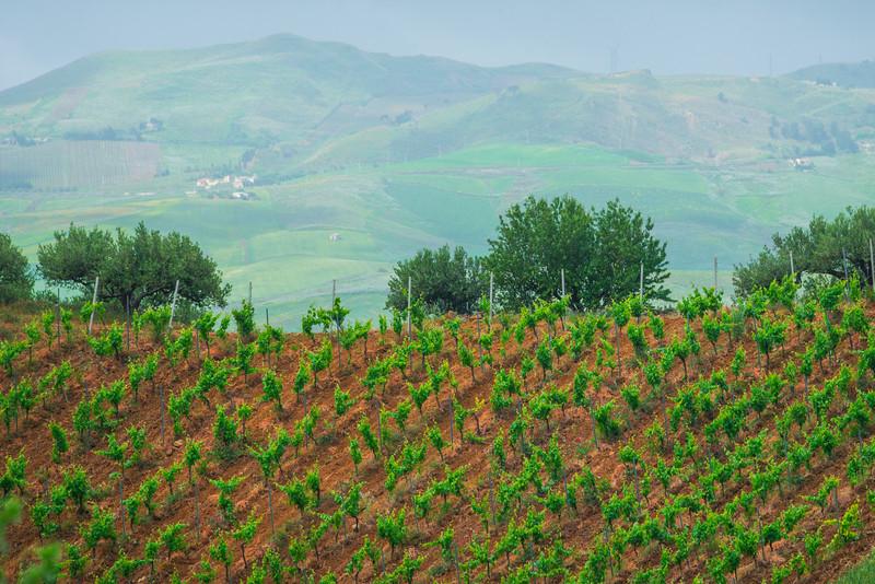 Sicily_Alcamo_24