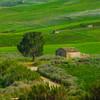 Sicily_Segesta_19