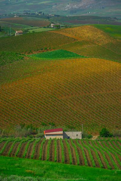 Sicily_Segesta_8