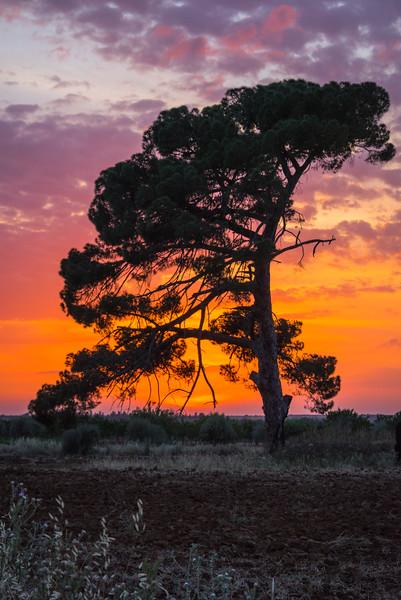 Pedalino Sunset