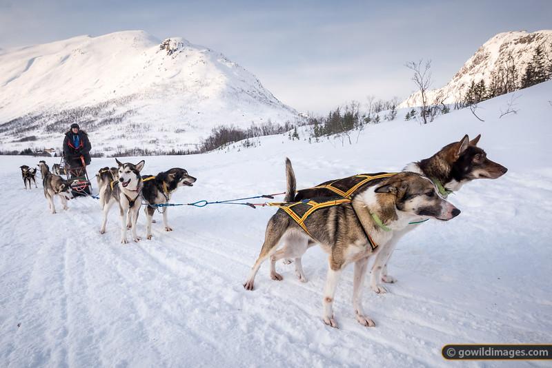 Sledding Tromsø
