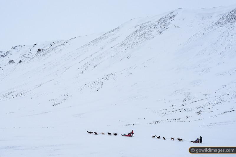 Arctic Dogsledding