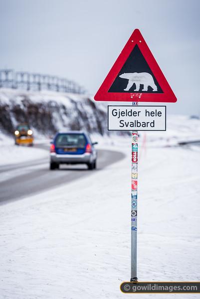 All Over Svalbard