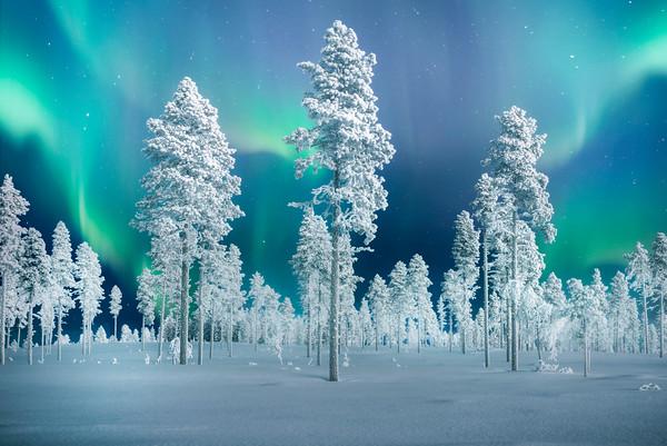 The Frozen Forests Of Sweden - Vittangi, Highway 395,  Sweden
