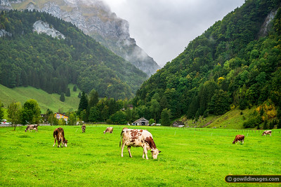 Misty Pastures