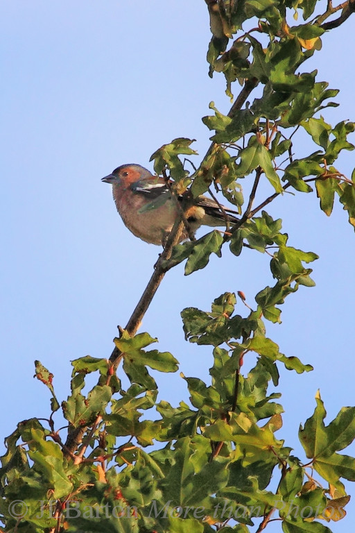 celebrating the morning