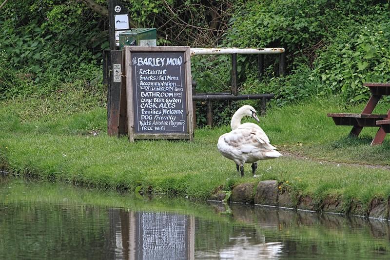 Three-legged Swan at the Barley Mow