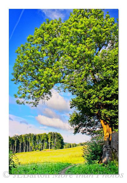 Summer  Trail Vienna Woods