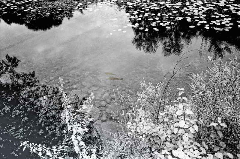 Fish!