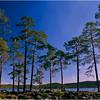 Pines and Lake. Lappi, Finland.