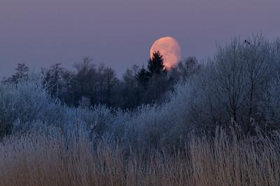 Skjære i nattefrost og fullmåne