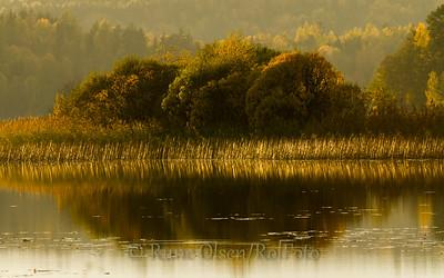 Gyllent høstlandskap