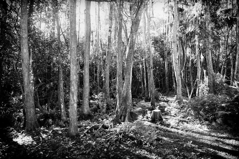 Big Cypress National Forest-4