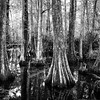 Big Cypress National Forest-2