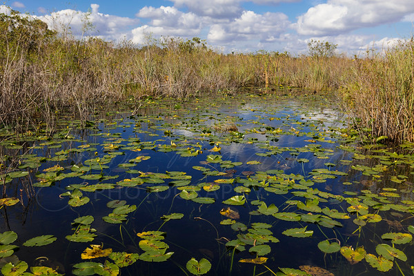 Everglades-5433