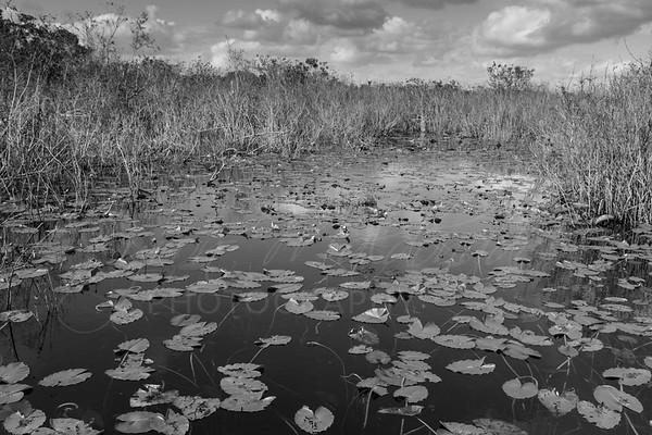 Everglades-5432