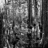Big Cypress National Forest-3
