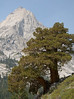 leconte_cyn_tree-7456