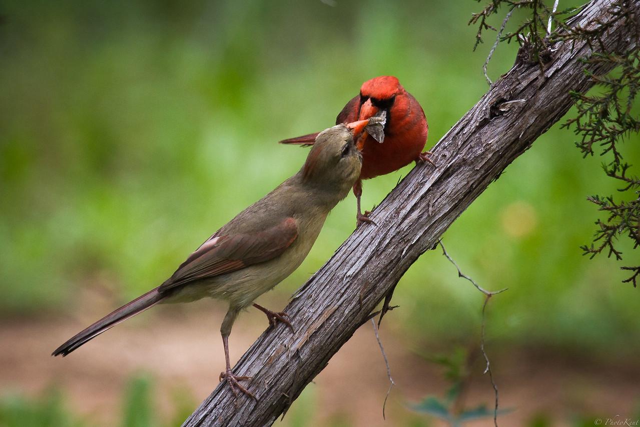 Springtime Courtship