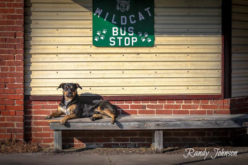 Sarge Dog