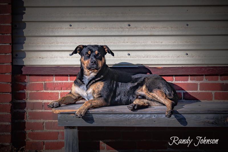 Sarge Dog-2