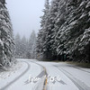 4  G Snowy Larch Mountain Road