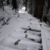 100  G Snowy Larch Mountain Summit Footprints Wide V