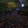 197  G Multnomah Falls Leaves V