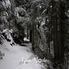 32  G Snowy Larch Mountain Summit Path