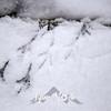 106  G Snowy Larch Mountain Summit Bird Tracks