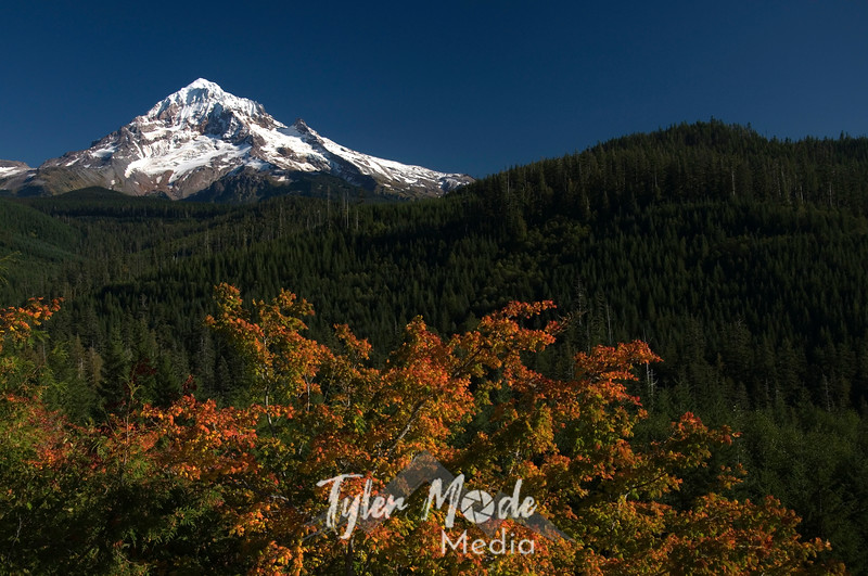 104  G Mt  Hood and Fall Colors