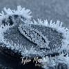 1  G Frosty Lock