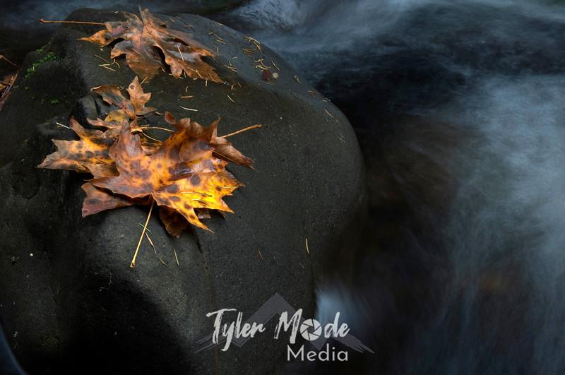 53  G Cedar Creek Close Leaf