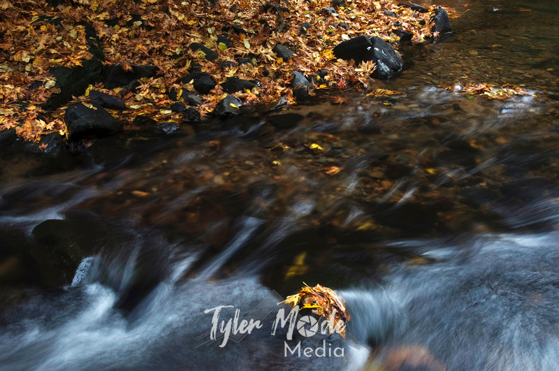 61  G Cedar Creek and Leaves