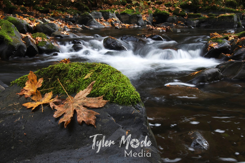 45  G Cedar Creek and Leaves